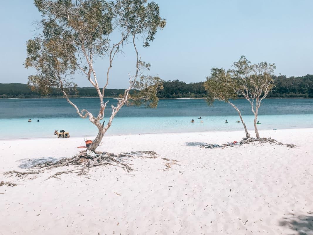 Back to basic op Fraser Island Fraser Island is back to basic en een hele gave ervaring. Fraser Island hoort zeker op de lijst thuis als je in Australië aan de Oostkust bent. Wij hebben deze trip gedaan met Dingo's Adventure resort. Bij deze organisatie start de trip in Rainbow Beach en vanuit daar ga je met 4x4 auto's naar Fraser Island. Fraser Island is echt bijzonder. Op Fraser Island zie je veel dingo's, dit zijn wilde honden en hier moet je echt voor uitkijken ook al zien ze er lief uit. Neem vooral goede schoenen mee op deze trip, want de slangen en spinnen kunnen op de loer liggen. Met deze trip ga je langs een prachtig meer met helderblauw water waar je kunt bijkomen van een heftige en wilde rit met de auto door de wouden. Op Fraser Island ligt ook een indrukwekkend scheepswrak die met een gunstige stand van het water helemaal droog ligt. Wat ook een bezoek waard is zijn de Champagne Pools. Dit zijn stukjes zwemwater tussen de rotsen waarbij je prachtig uitzicht hebt over de zee. Op Fraser Island zijn meerdere kliffen die je kunt beklimmen om vervolgens vanuit deze hoogte reuzenschildpadden en haaien te spotten! Het bijzondere van Fraser Island is dat het veel mooie plekken heeft die je niet snel verwacht. Zo is het mogelijk dat je een walk doet over zandvlaktes en die je ineens bij prachtige meren brengen.