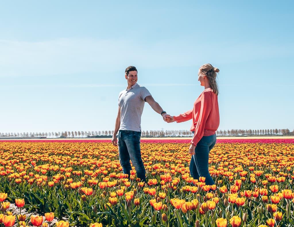 Leukste uitjes van Nederland, Tulpenvelden bezoeken in Goeree Overflakkee in Zeeland. Bloeiende tulpen.