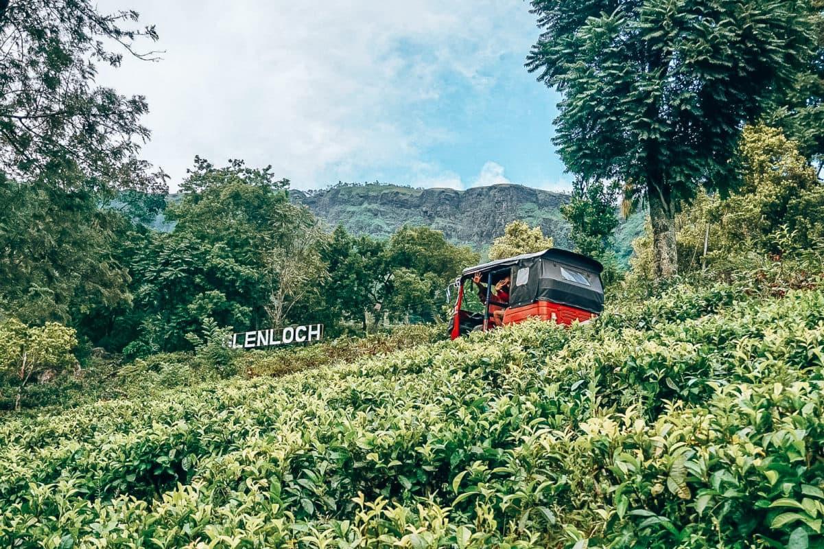 Hoogtepunten Sri Lanka, Hoogtepunten Nuwara Eliya, Tuktuk rijden in de theeplantages