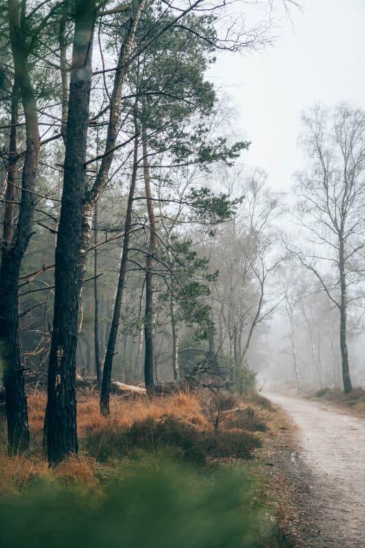 Wandelen op de Sallandse Heuvelrug. Mooie wandelroutes en tips voor bezienswaardigheden.